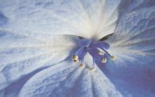 Acapulco blue inserto kwiat - obkládačka inzerto 25x40