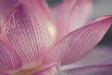 Acapulco rosa inserto kwiat - obkládačka inzerto 25x40