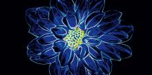 Fluorescent Flower blue inserto - obkládačka inzerto 29,7x60